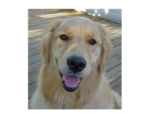 - A website dedicated to what this dog wants to say!
