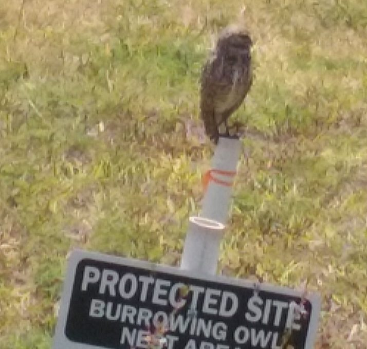 Owl w-protected sign