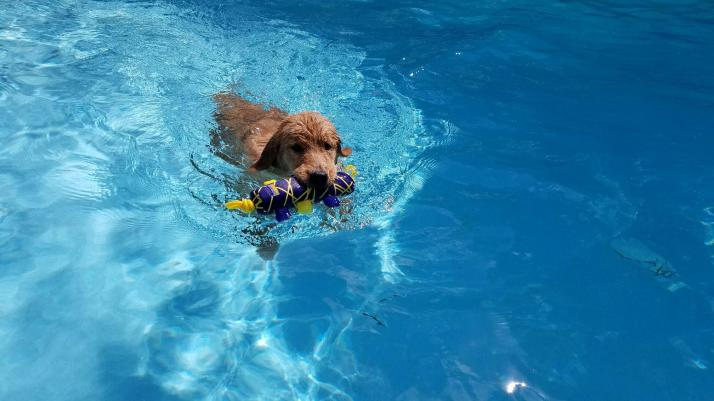 Remi loves the pool. Is she a future Olympian?